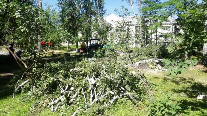 «Никаких глобальных переделок не предвидится»: показываем в 6 кадрах, как рубят деревья в парке «Берёзовая роща»