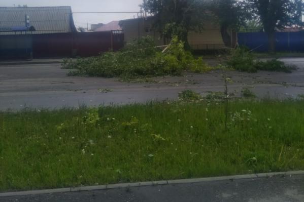 Горожане в соцсетях выкладывают последствия сильного ветра. Одним из таких последствий стало падение дерева на высоковольтную линию в Северном