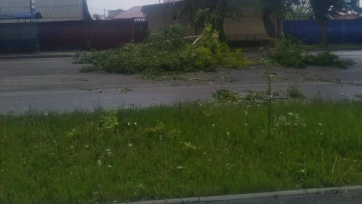 Сотни курганцев остались без электричества из-за поваленного ветром дерева