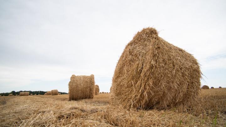 Ростовская область получит 680 миллионов рублей, чтобы сдержать цены на хлеб