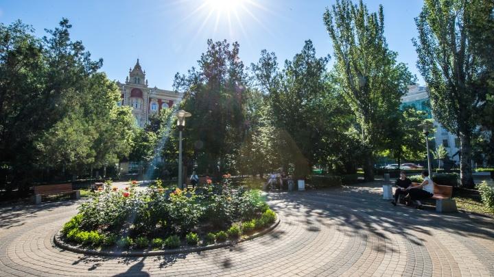 Власти Ростова потратят 100 миллионов рублей на сосны и ели