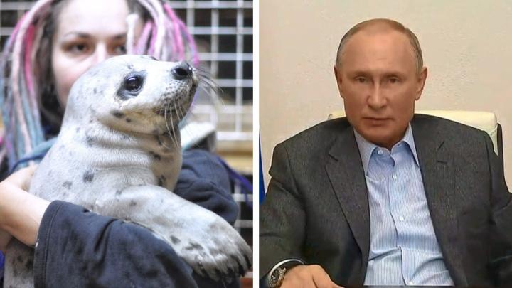 Архангельские волонтеры пообщались с Путиным о спасении арктических животных