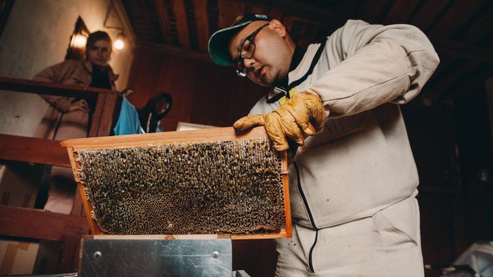 Здесь пчелы живут в цветном павильоне и делают правильный мед: репортаж с необычной пасеки под Тюменью