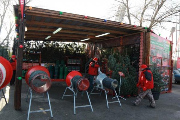 Нераспроданные деревья обещают высадить в городе