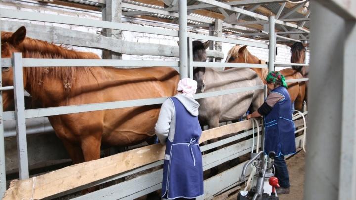 Школьники Башкирии будут питаться халяльной кониной