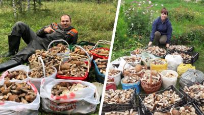 10 мест для тихой охоты: уральцы рассказали, где насобирали больше всего грибов
