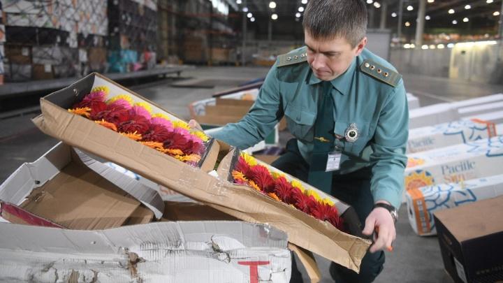 В Кольцово обнаружили опасного паразита в итальянских цветах, прилетевших к 8 Марта