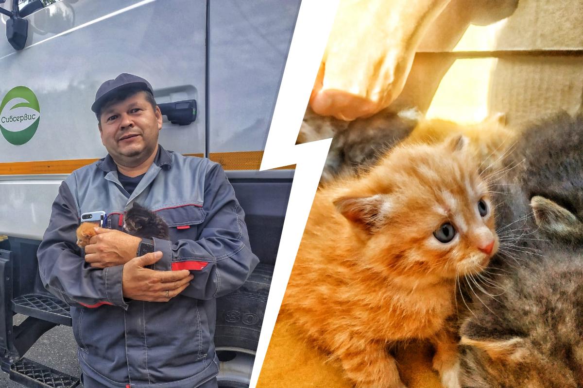 Время от времени работники ТЭО находят не только брошенных котят, но и собак и даже черепашек
