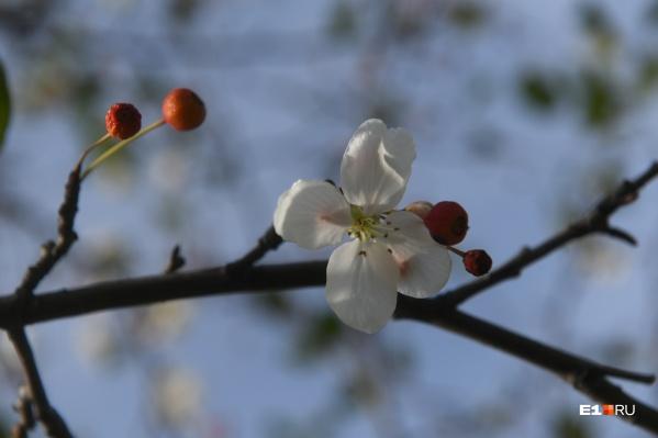 На дереве есть и цветы, и плоды