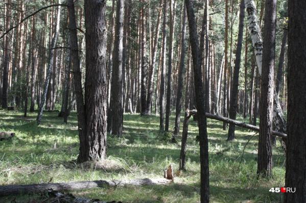 В Кургане до 1 августа действует запрет на посещение лесов