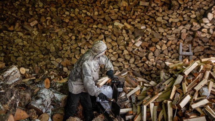 Больше 8 тысяч гектаров леса вырубили в Кузбассе с начала года