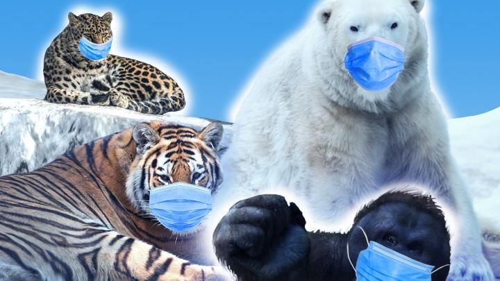 Обведут ли вас вокруг носа? Угадайте животных исчезающих видов по мордочке — милый тест от НГС