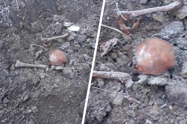 Кости обнаружены в районе села Лугового