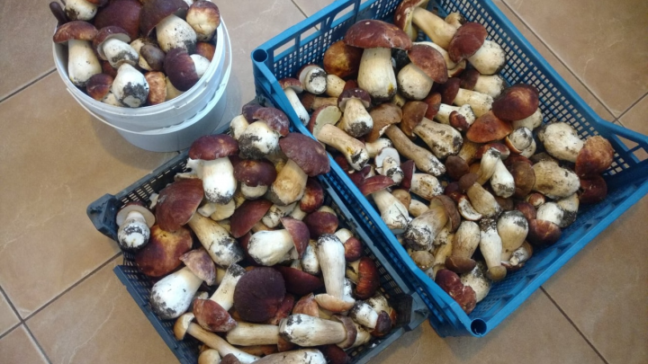 «Это уже второй слой»: новосибирцы вовсю хвастаются грибным уловом (везут вёдрами и коробками)