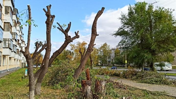 Жителей Кургана возмутила обрезка деревьев на проспекте Конституции