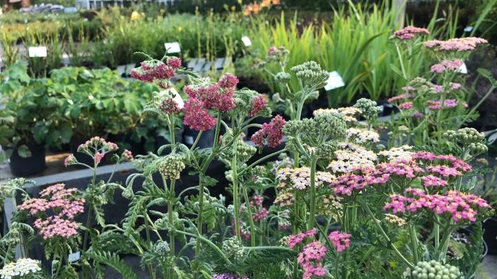 Садовому центру «Астра» 20 лет: всем покупателям сделают скидку 20% в честь юбилея