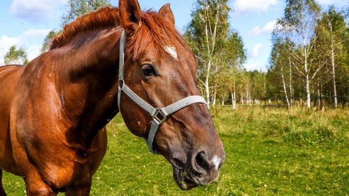 Мэрия попросила помощи УГИБДД, чтобы убрать лошадей с Покровки. Но есть нюансы