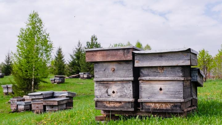 «Хотите липовый мед? Так не рубите липы»: как семья из Перми сделала «Медовое раздолье»