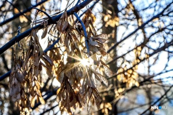Сейчас за окном настоящая зима — правда, пока без снега