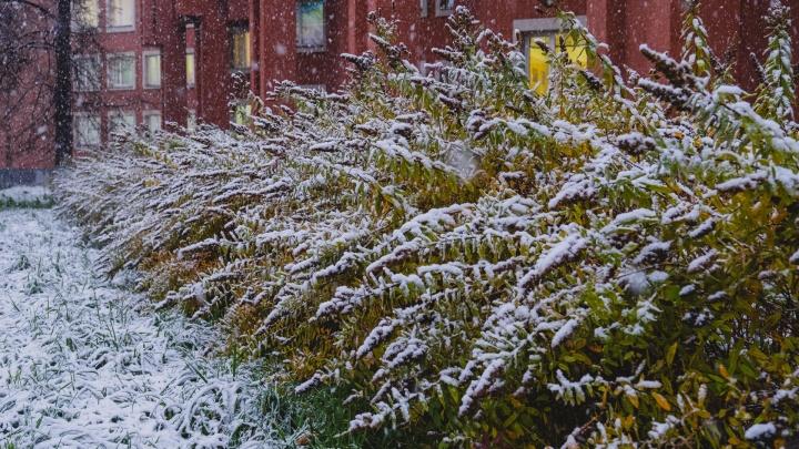 Синоптики рассказали, какой будет погода Пермском крае на неделе