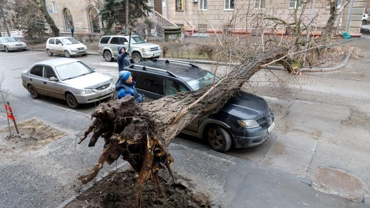 В 100 метрах от администрации Волгограда дерево раздавило внедорожник краснодарца