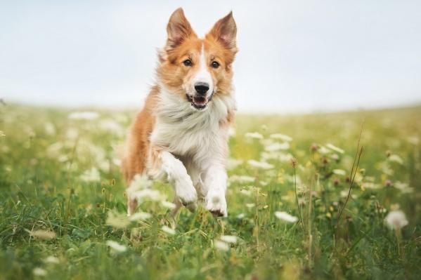 Количество «собачников» за это время выросло более чем в два раза