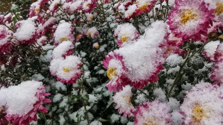 Первый снег в середине ноября — это вообще нормально для Ростова? 161.RU вспомнил даты начала зимы