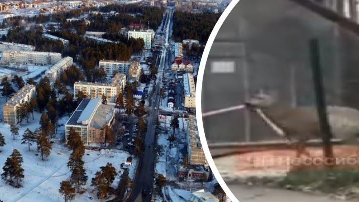 Напуганная косуля мечется по центру Лесосибирска