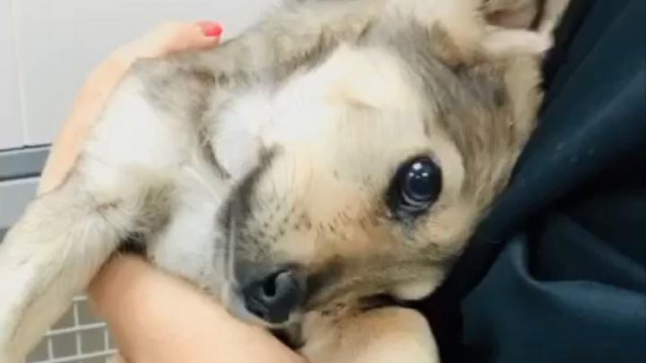 «Ему целились прямо в ухо»: волгоградцы спасают от смерти щенка с пулей в голове