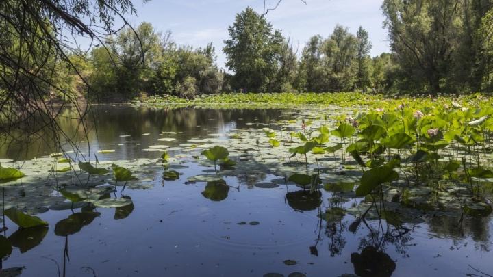 В Волгоградской области уникальное озеро и пойму хотят сделать Меккой для туристов