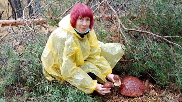 Женщина нашла в тюменском лесу гриб-гигант. Вы только посмотрите на него!