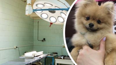 Дело Лютика: ярославец подал в суд на ветеринаров из-за смерти щенка