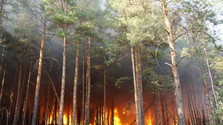 Гидрометцентр РФ заявил о сильной засухе в Ростовской области