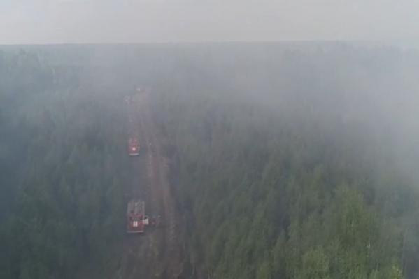 Леса горят из-за аномальной жары