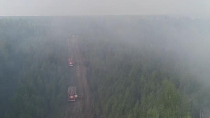 В Курганской области горит более 50 гектаров леса