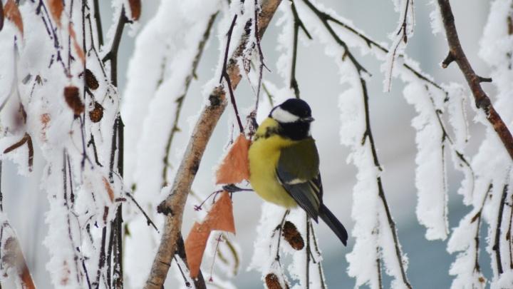 «Значительно холоднее, чем год назад»: Илья Винштейн сделал прогноз погоды на зиму в Кургане