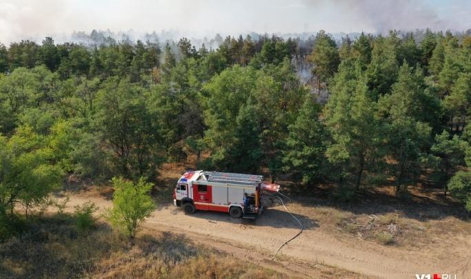 «Погорели реликтовые голубые ели»: в Волгограде тушили крупный пожар на Ергенинских высотах