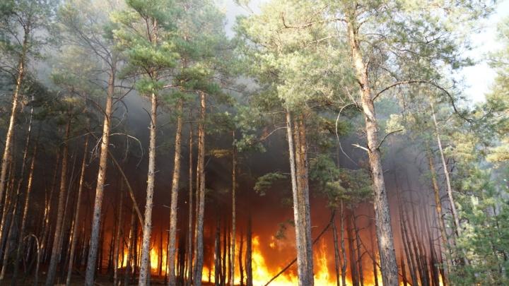 В Минприроды рассказали, что помешало быстро потушить пожары на Дону