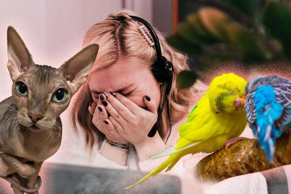 Аллергикам лучше отказаться совсем от домашних животных