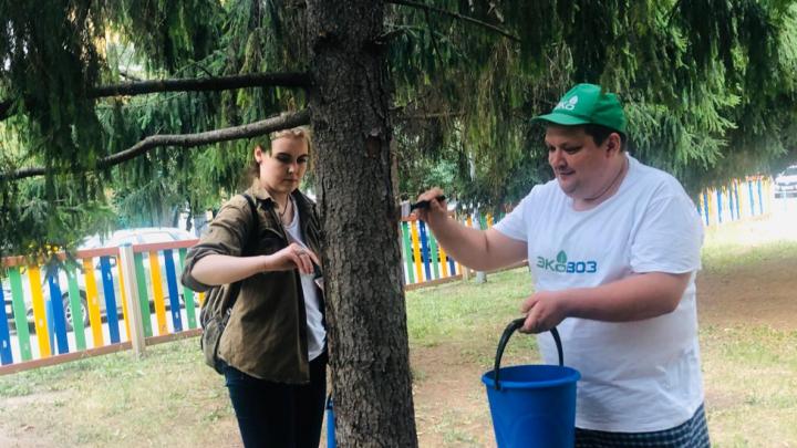 Болеют, как люди: в Тольятти хвойным деревьям «прописали» лечебную мазь