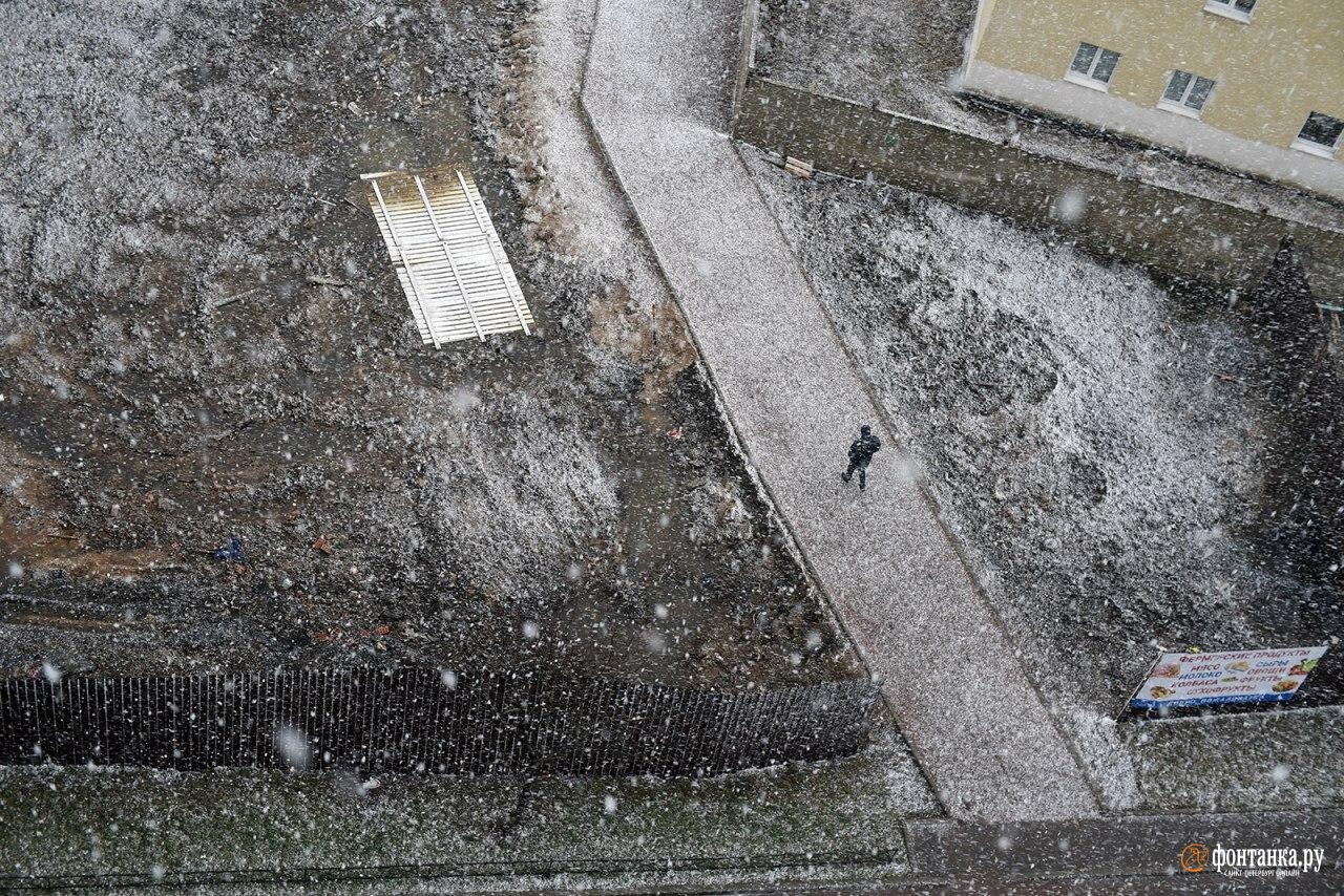 Начало 2020-го тоже было немного зимним. Санкт-Петербург, 4 января 2020 года