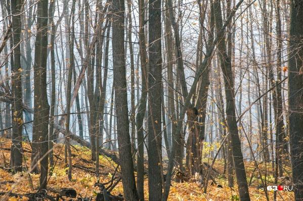 Следы охоты обнаружили в лесу