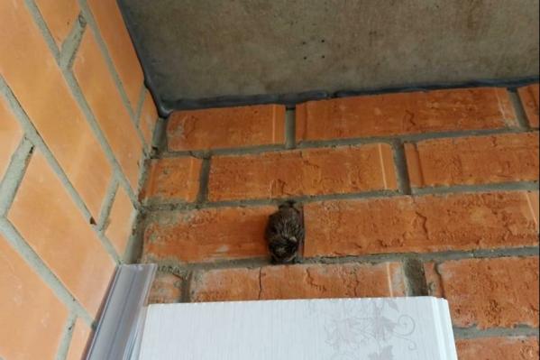 Летучие мыши стали чаще прилетать к жителям города