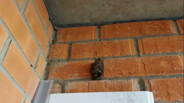 Летучие мыши поселились на балконах в Покровке