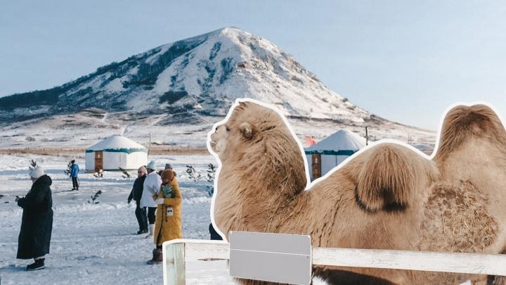 Верблюд, ледяная пещера и Дед Мороз: рассказываем, где под Уфой отдохнуть за 100рублей