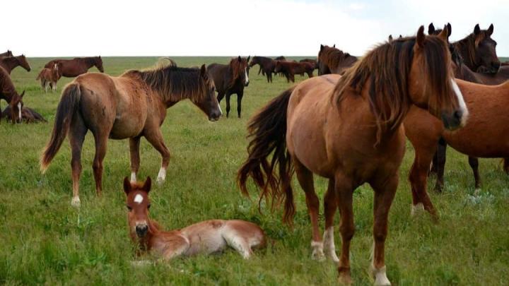 Губернатор-фотограф: топ-20 снимков донской природы от Василия Голубева