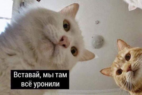 Если бы коты знали, как далеко они зайдут