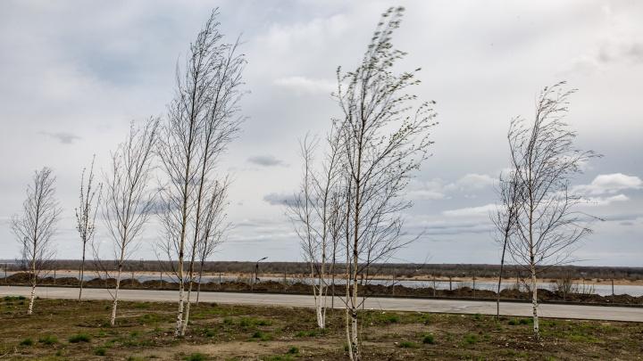 Перед 8 Марта согревшийся на солнце Волгоград продует холодным сильным ветром