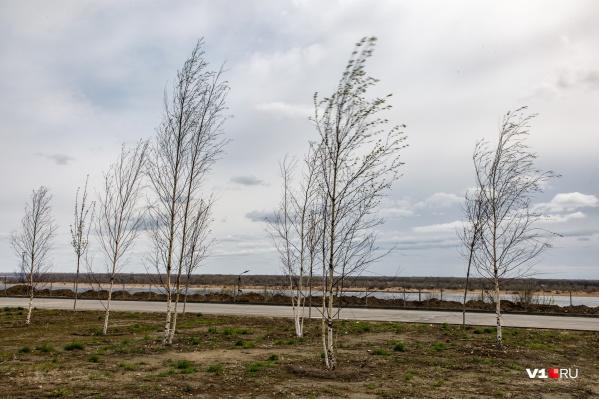 Холодный ветер долетит до Волгограда в ближайшие дни