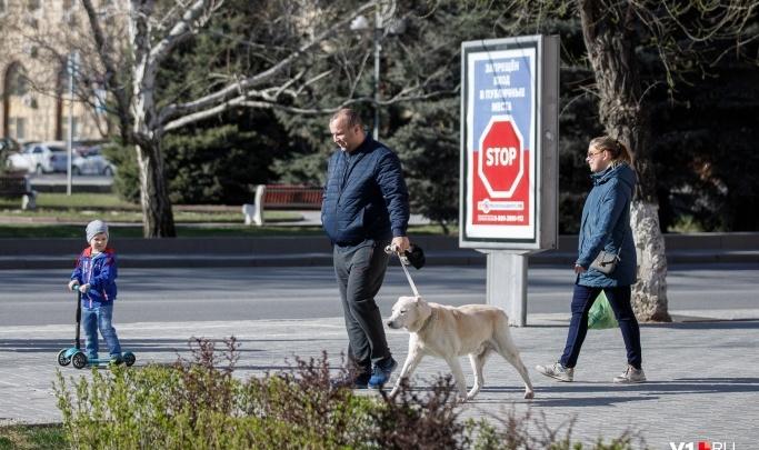 Можно сказать, что иду в магазин: волгоградцы не спешат брать домой бездомных животных